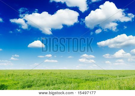 green spring field and the blue sky