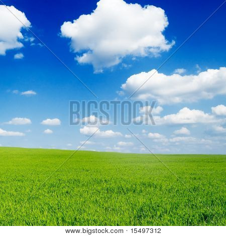 white beautiful clouds and green field