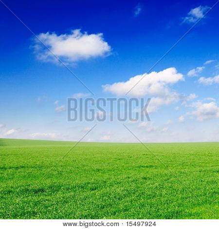 field on sky and white clouds