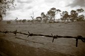 stock photo of barbed wire fence  - barbed wire fence borders the old desolate farmland - JPG