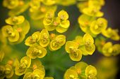 Small And Yellow Flowers poster