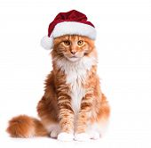 Portrait of Maine Coon kitten in red Christmas Santa hat. Funny cute orange striped cat dressed as S poster
