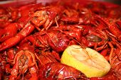 foto of crawdads  - The taste and smell of cajun country - JPG