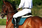pic of horse riding  - man riding horse - JPG