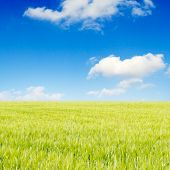 green field and fluffy clouds poster
