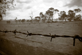 pic of barbed wire fence  - barbed wire fence borders the old desolate farmland - JPG