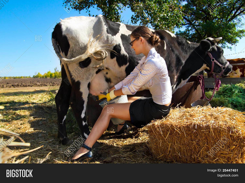 Bild und Foto: Junge Frau Melken Kuh Auf | Bigstock