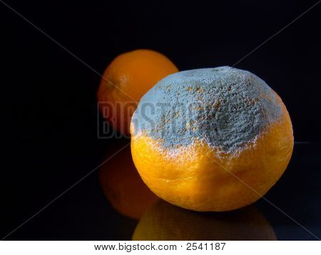Mouldy Orange