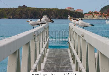 Seagulls On Bridge 1