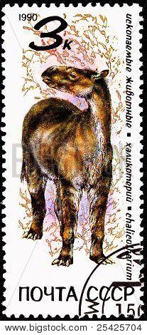 Extinct Furry Chalicotherium Animal