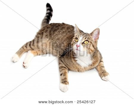 Searching Cat