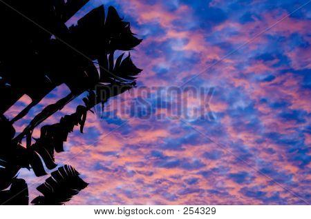 Tropical Sunset 1