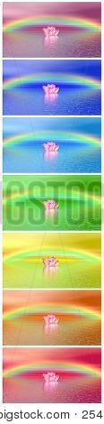 Chakra Colors Of Lily Flower Un Der Rainbow