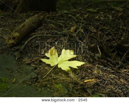 Golden Leaf 2 poster