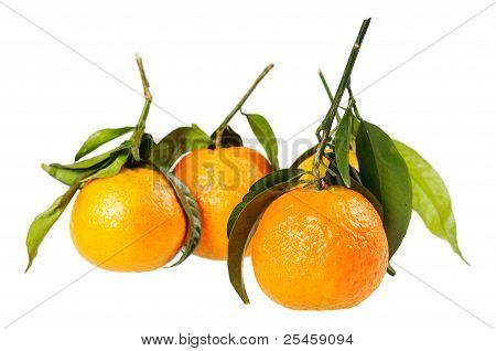 Tangerine on branch.