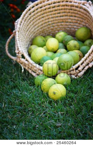 lemons in basket on grass