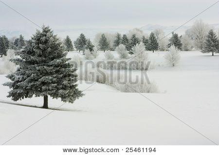 Winter Frost III