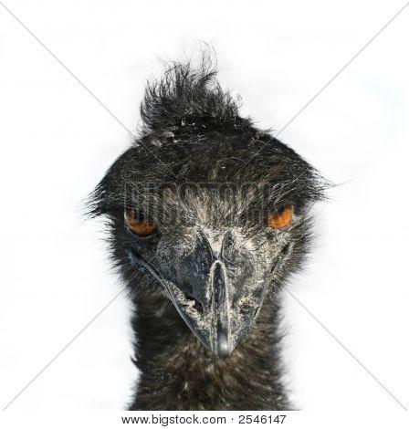 Emu Eyes