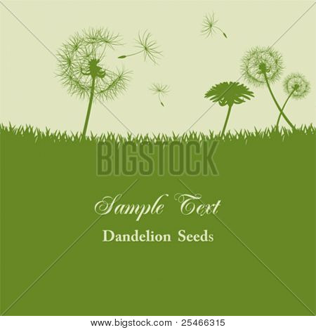 Dandelion seeds background. Illustration vector.