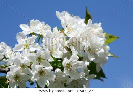 New Life Flower In Blue Vivid Sky