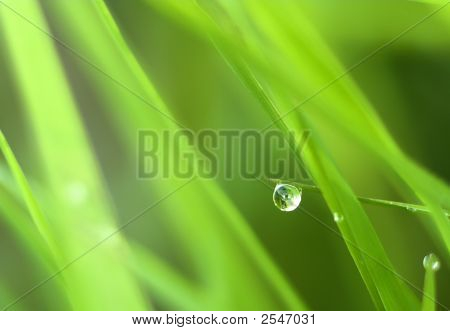 Closeup Of The Green Grass With Dew