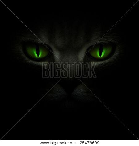 Grüne Katzenaugen Leuchten im Dunkeln