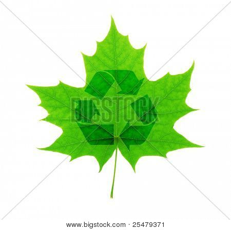 Recycle symbol over green maple leaf isolated on white background