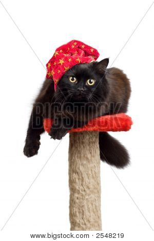 Black Cat In A Red Cap Isolated