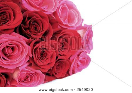 Bundle Of Roses