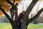 Two Brothers Climbing An Autumn Tree Outdoors In A Park With Bright Evening Sun Behind. poster