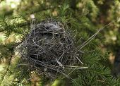 foto of bird-nest  - A small bird - JPG