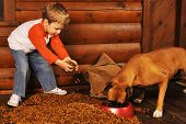 foto of bag-of-dog-food  - Preschooler feeding his pet boxer by dumping a large bag of dry dog food on the porch of his log home - JPG