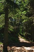 Dramatic Forest Landscape. Hiking Trail In The Forest Of Durmitor National Park. Walk To The Black L poster