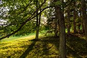 Autumn Landscape With Autumn Trees In The Park. Autumn Nature -yellowed Autumn Park In Autumn Sunny  poster
