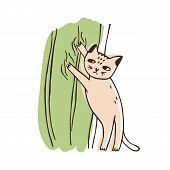 Nasty Cat Climbing On Curtains Isolated On White Background. Funny Naughty Kitty Tearing Off Home De poster