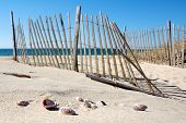 image of cape-cod  - Cape Cod Beach with Fence and Sea Shells - JPG
