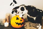 Cute Kitty Playing  At Witch Cauldron With Jack O Lantern Pumpkin With Candles, Broom And Bats, Ghos poster