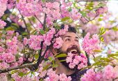 Tenderness Concept. Man With Beard And Mustache On Happy Face Near Tender Pink Flowers. Hipster With poster