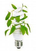 Fluorescent energy saving light bulb with green plant isolated on white background