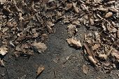Flower, Dry, Leaf, Leaves, Autumn, Background, Brown, Nature, Texture, Season, Fall, Plant, Dried, F poster