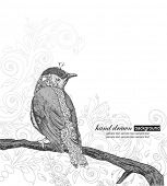 picture of bluebird  - Hand Drawn Bird on Branch - JPG