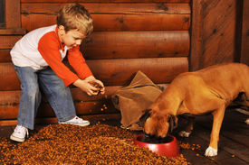 picture of bag-of-dog-food  - Preschooler feeding his pet boxer by dumping a large bag of dry dog food on the porch of his log home - JPG