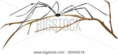 Araña sobre una rama