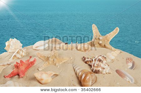 Starfish And Seashells On The Sandy Beach