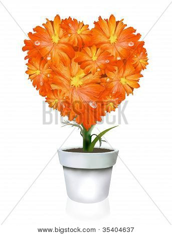Heart Shape of Orange Gerbera in Flowerpot