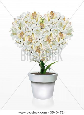 Heart Shape of White Tuberose in Flowerpot