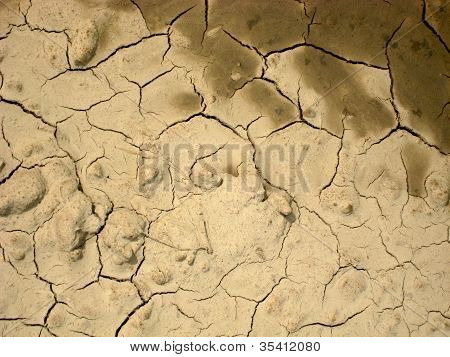 Cracks In Parched Earth