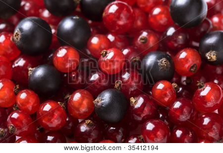 Red Currant And Black Currant Backgroung