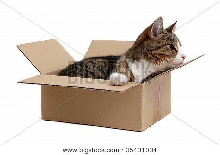 Snoopy Little Cat In Box