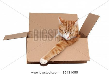 Sleeping Cute Tomcat In Removal Box